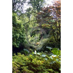 Bridge at Exbury Gardens