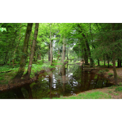Woodland Stream, The New Forest