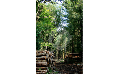 New Forest Timber